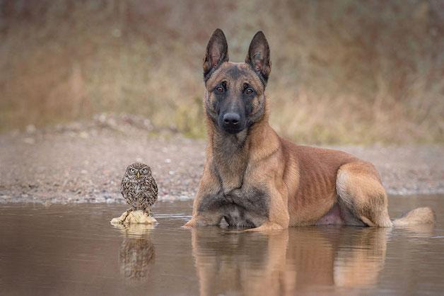 cachorro-e-coruja-05