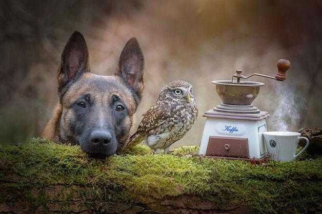 cachorro-e-coruja-07