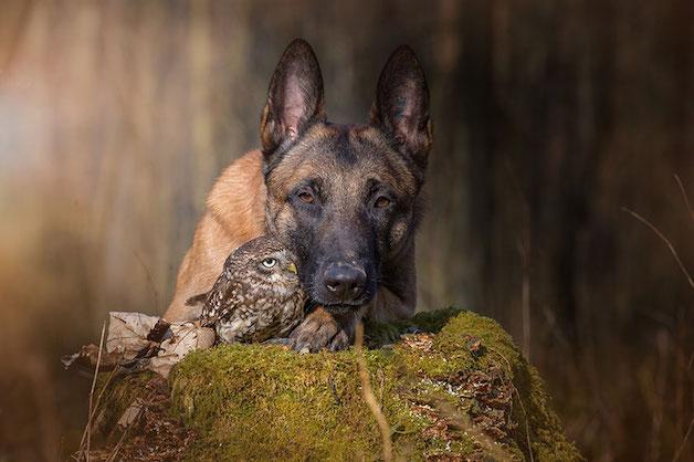 cachorro-e-coruja-14