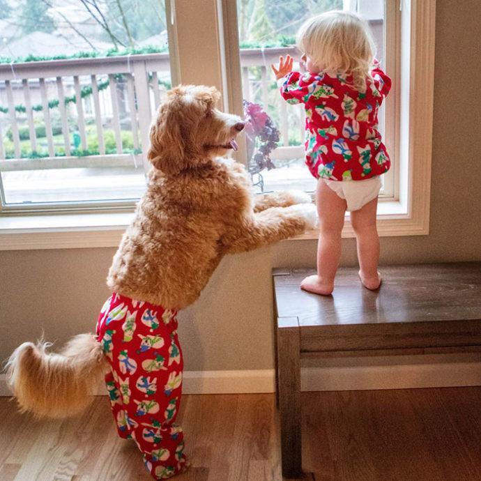 foster-child-labradoodle-dog-book-buddy-reagan-14-690x690