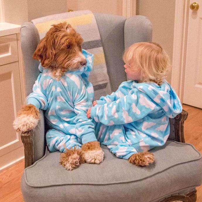foster-child-labradoodle-dog-book-buddy-reagan-16-690x690