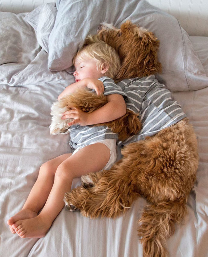 foster-child-labradoodle-dog-book-buddy-reagan-17-690x854