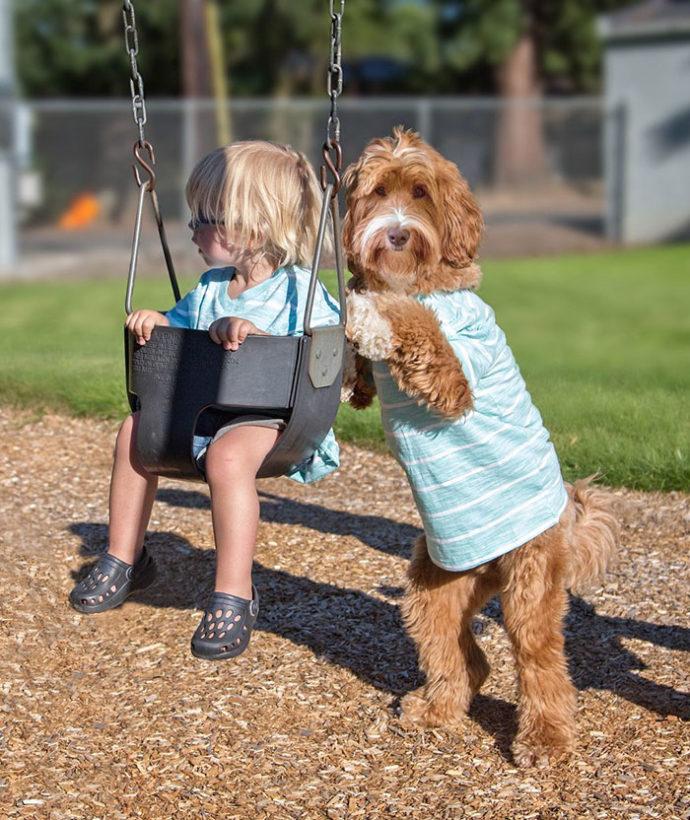foster-child-labradoodle-dog-book-buddy-reagan-18-690x820