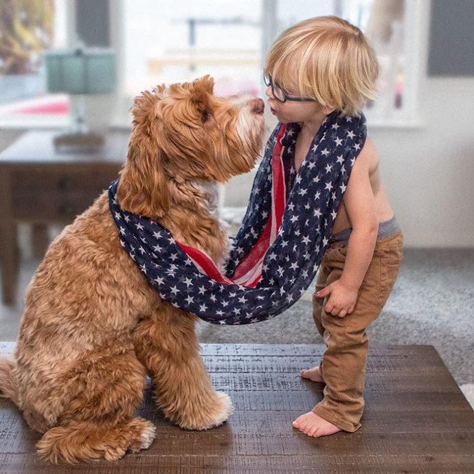 foster-child-labradoodle-dog-book-buddy-reagan-19-690x690