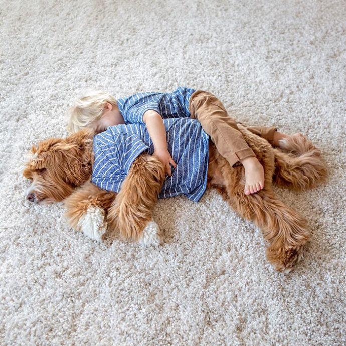 foster-child-labradoodle-dog-book-buddy-reagan-27-690x690