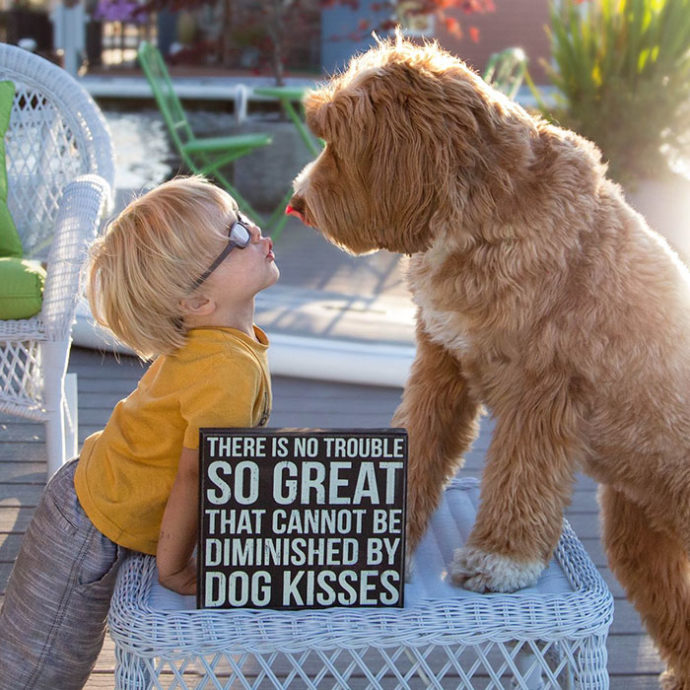 foster-child-labradoodle-dog-book-buddy-reagan-5-690x690