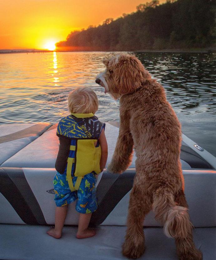 foster-child-labradoodle-dog-book-buddy-reagan-7-690x832